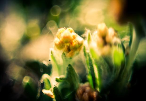 Things — Reverse Flower