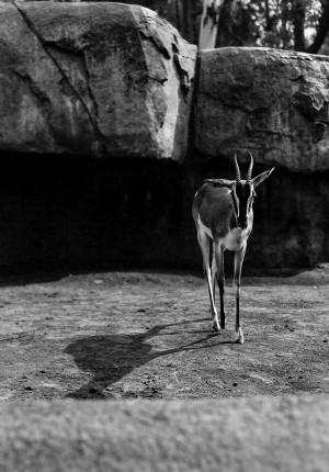 Things — Gazelle